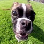 Melhores Vídeos com Animais Registrados Por Gopro
