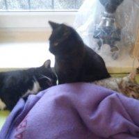 Gato Enfermeiro Cuida de Animais Doentes