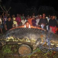 Filipinos Capturam Crocodilo de Mais de 1 Tonelada